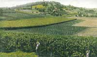 stone-hill-vineyards-1850s